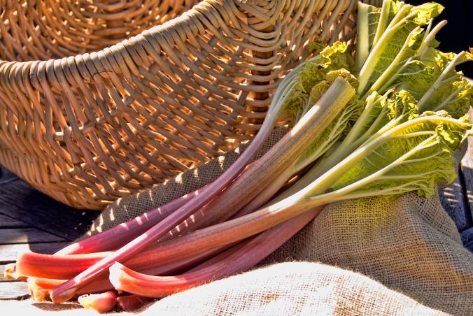 picked rhubarb