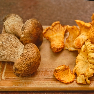 girolles and porcini