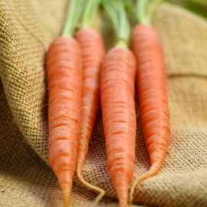 harvested carrots 2
