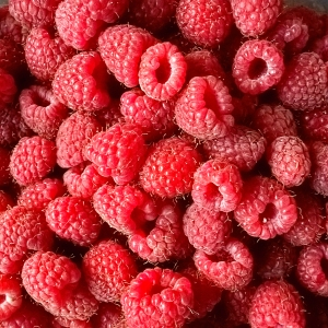 harvested raspberries