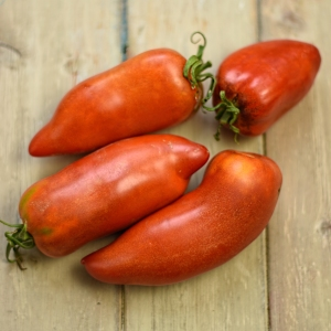 harvested buffalo horn tomatoes